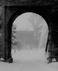 Their skin was as pale as the snow wrapping the world outside. Their skin was as pale as the snow wr Eddard Stark, Sansa Stark, Slytherin, Hogwarts, Half Elf, Yennefer Of Vengerberg, The North Remembers, Crimson Peak, House Stark