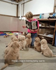 Funny pictures about Tiny Therapy Dogs In Training. Oh, and cool pics about Tiny Therapy Dogs In Training. Also, Tiny Therapy Dogs In Training photos. Cute Puppies, Cute Dogs, Dogs And Puppies, Doggies, Poodle Puppies, Perros Golden Retriever, Retriever Puppies, Funny Golden Retrievers, Golden Retriever Training
