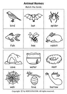 Animal Homes (PDF)