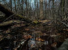 Gloomy Firewood, Texture, Crafts, Photography, Surface Finish, Woodburning, Manualidades, Photograph, Fotografie