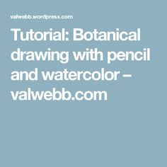 Tutorial: Botanical drawing with pencil and watercolor – valwebb.com