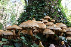 https://flic.kr/p/oXrh5x | Mushrooms | Mushrooms