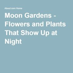Moon Gardens - Flowers and Plants That Show Up at Night