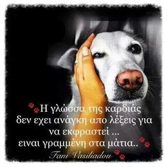 Kindness To Animals, My Best Friend, Best Friends, Blue Nose Friends, Greek Words, Greek Quotes, Dog Quotes, Picture Quotes, Dog Love