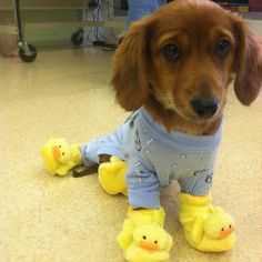 Love his ducky slippers!
