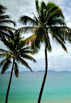 Palm trees in paradise.