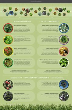 New Zealand native shelter belt planting infographic.