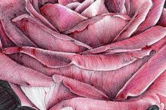 ROSE ACEO Original ball point pen drawing by AngelsFacesPortraits
