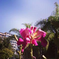 As cores do dia  #flores #natureza #vida #vívida #flower #nature #RioDeJaneiro #RJ #Rio #vbatalha