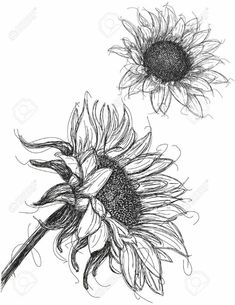 Sunflower Drawing, this is the most incredible sunflower sketch I've seen in a looong time, brilliant! Sunflower Sketches, Sunflower Drawing, Sunflower Art, Sunflower Tattoos, Pencil Art, Pencil Drawings, Flower Drawings, Rose Pictures, Desenho Tattoo