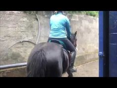 Mary 2019 Today was Chester's third ride. Horse Training, Chester, Third, Horses, Pets, Animals, Instagram, Animaux, Horse
