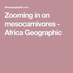 Zooming in on mesocarnivores - Africa Geographic