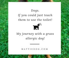 When You Are Dog Is Allergic To Grass It Can Be A Pain In The….