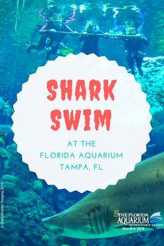 Shark Swim at the Florida Aquarium