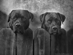 Mutt and Jeff by Larry Marshall Photography, via 500px