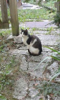 Biologico trentino gatto La Fonte az agricola bio