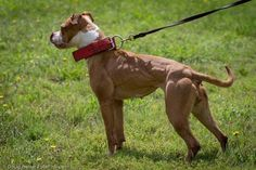 APBT in great shape.