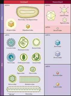 DNA and RNA virus