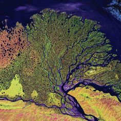 Lena River Delta, Russia, 2000The Delta extends 62 miles into the Laptev Sea and Arctic Ocean, and includes a protected wilderness area and wildlife refuge. The delta is frozen tundra for about seven months of the year, and spring transforms it into a lush wetland. Vegetation appears as shades of green, sandy areas as shades of red, and water as purples and blues.