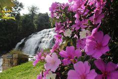 Cachoeira da Usina- Ervália MG