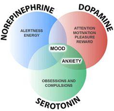 Los neurotransmisores y su efecto sobre nosotros. #Neuropsicologia #Neurofisiologia