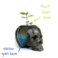 abailable on etsy:  www.etsy.com/shop/ColdMountainStudio ⭕ Self watering #skull #planter  ❎ Ceramic skull hold a water reservoir, ceramic pot holding the plan, slowly sucks in the water to the soil. Almost like magic! #magic #selfwatering #ceramic #realistic #real #metalic #newplanterscomingup