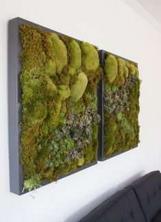 A Touch of Nature for Your SPA or Favorite Patient. Living Wall used as a piece of art Moss Wall Art, Moss Art, Indoor Garden, Indoor Plants, Art Of Living, Living Walls, Moss Garden, Garden Terrarium, Deco Floral