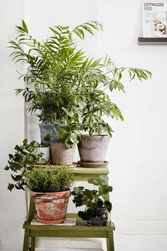 Inspiration für mehr Pflanzen im Zuhause #greeninterior #zimmerpflanzen #pflanzen #indoorplants