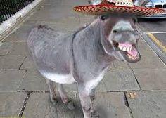 Image result for donkeys
