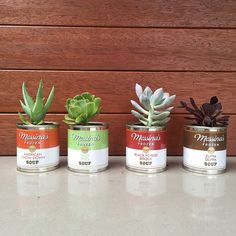 Who would have thought...these clever little tins also make great terrarium vessels! #RCCmelb