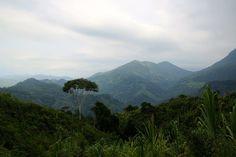 Jungle, Colombia