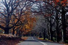 Country Roads, Australia