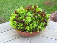 Great idea. Grow your lettuce in a big pot.