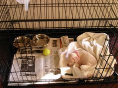 Crate potty training new puppy