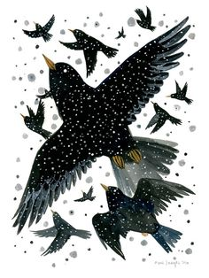 Diana Sudyka - Starlings - 6 x 8 inch Archival Inkjet (giclée)Print Art And Illustration, Illustrations Posters, Starling, Art Plastique, Bird Art, Watercolor And Ink, Giclee Print, Original Paintings, Collage