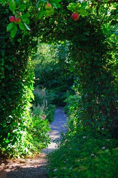 Path with a garden portal with ivy