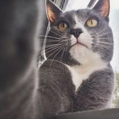 selfie game on point ������ - - - - #animals #pet #dog #cat #dogs #cats #photooftheday #pets #instagood #cute #love #nature #pets_of_instagram #petsagram #instagrampetphotos #dogsofinstagram #catsofinstagram #petsofinstagram #photooftheday #photography #like #follow #lol #funny #INSTACAT_MEOWS #featurecatmeows #cat_features #adventurecats #fluffy_n_adorable #yourcatphoto #selfie http://unirazzi.com/ipost/1509178584990992698/?code=BTxre1VA8k6