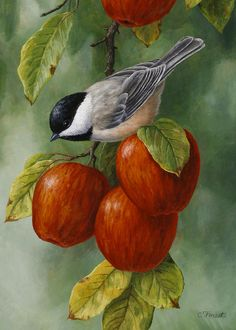 Apple Chickadee Greeting Card 3 Painting by Crista Forest