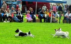 March House Books Blog: A visit to Sherborne Castle Country Fair