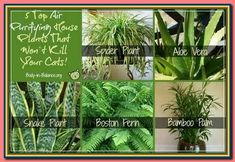 (paid link) Purifying Houseplants That Are safe for Cats and Dogs 1. money Tree 2. Palms 3. Spider forest 4. Boston Fern 5. Tradescantia Zebrina 6. #catsafehouseplants