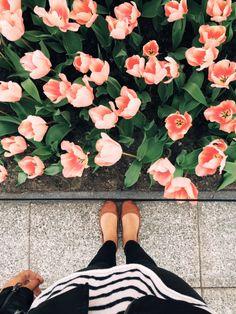 vousetesmoncoeurr:  Apricot Perfection Tulips at the Keukenhof Gardens for #TulipTuesday