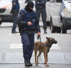 Este Heroico Perro dio su vida en París. El mundo se lo ha agradecido de una manera muy especial