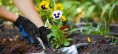 Quando se cultiva uma planta em casa ou no apartamento, o desejo é o mesmo: que ela se desenvolva sempre saudável e bonita. Mas às vezes, o que se presencia são sinais de que a espécie não está nada bem.