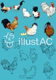 にわとり色々1 Cartoon Rooster, Roosters, Drawings, Painting, Animals, Animales, Animaux, Painting Art, Rooster