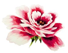 My Watercolour Floral Illustration Watercolor Rose, Watercolour Painting, Floral Illustrations, Botanical Illustration, Painting Inspiration, Work Inspiration, Drawing Sketches, Drawings, Wallpaper Backgrounds