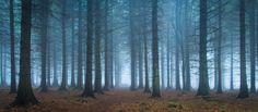 Darley Mist 2 - Darley Moor, Peak District, UK