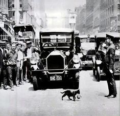 Mother cat stops traffic 1925 - A cat carrying her kittens across the street stopped New York City traffic on July Crazy Cat Lady, Crazy Cats, Feral Heart, Art Quotidien, Mother Cat, Photo Chat, Tier Fotos, Vintage Photographs, Historical Photos