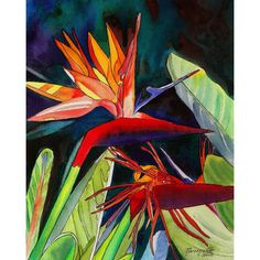 Bird of Paradise 8x10 print from Kauai Hawaii Kauai Garden of Paradise... ($26) ❤ liked on Polyvore featuring home, home decor, wall art, blue home decor, watercolor painting, garden wall art, red painting and red home decor