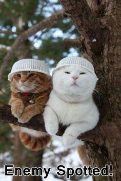 #Cats #Cat #Funny