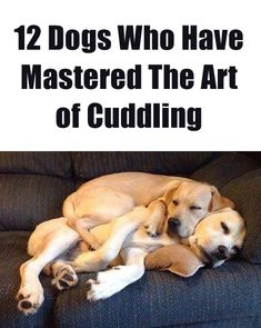These pics are cute beyond words. http://theilovedogssite.com/12-dogs-who-have-mastered-the-art-of-cuddling/